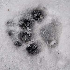 Le chien et le froid