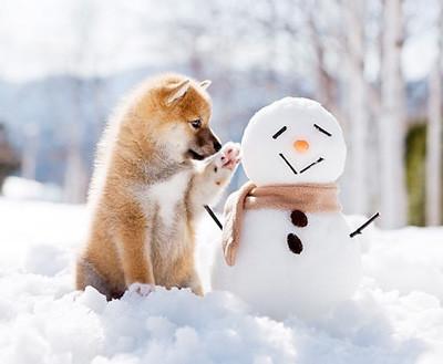 Fermeture de Noël / Nouvel an