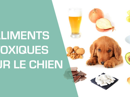 Les aliments dangereux, voir interdits, pour les chiens