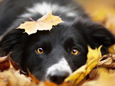 Bien aborder l'automne avec son chien