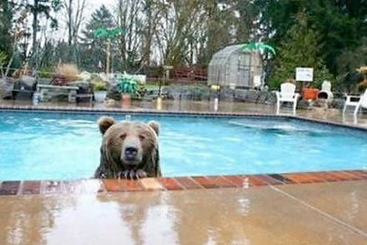 bear_you_build_houses_in_my_woods_i_swim
