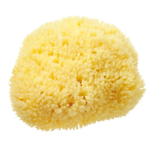 "Premium Quality Natural Sea Sponge - approx 3.5"""