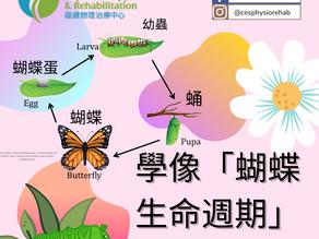 學像「蝴蝶生命週期」來伸展 !