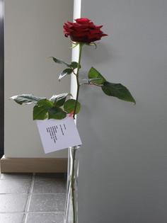 Kwints eerste roos 21 maart 2008.jpg