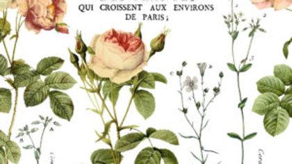 Flora Parisiensis Decor Transfer™ - Iron Orchid Designs