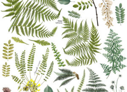 Fronds Botanical Decor Transfer™ - Iron Orchid Designs