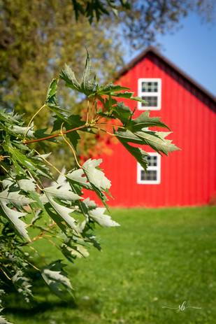 Barn and Leaves.jpg