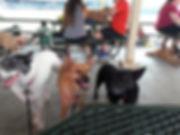 dog days at RB game.jpg