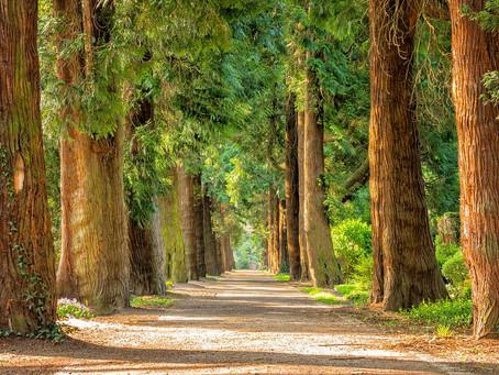 Por entre caminhos afetivos