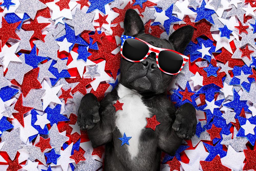 Keeping your Dog Safe during Fireworks