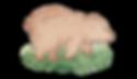 bear (1).PNG