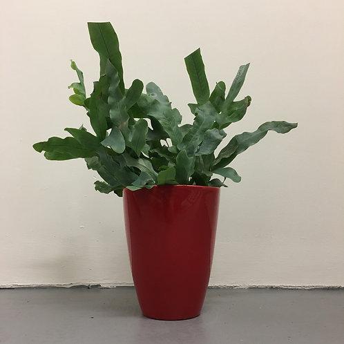 Square Topped Vase