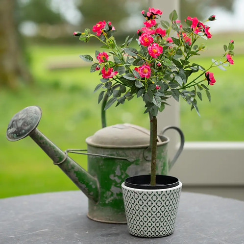 Faux Rose in Pot - Pink