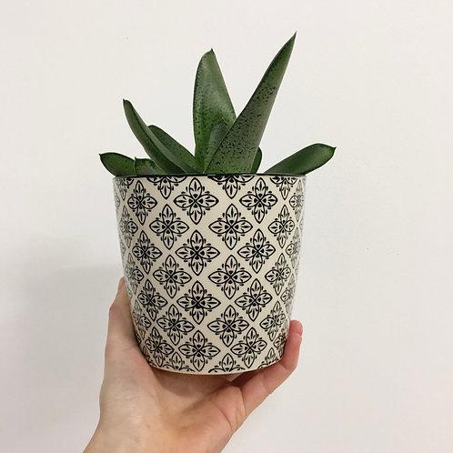 Ceramic Pot - Black/White
