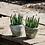 Thumbnail: Whitestone Cactus Pot