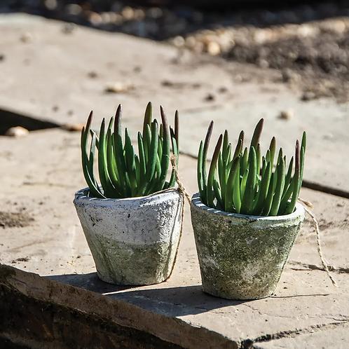Whitestone Cactus Pot