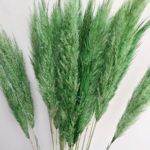 Pampas Grass - Green