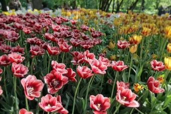 MSU Botanical Garden Aptekarskiy Ogorod