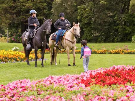 Horseback Riding Returns to Golden Gate Park