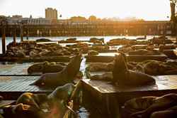 Spend a day at Pier 39
