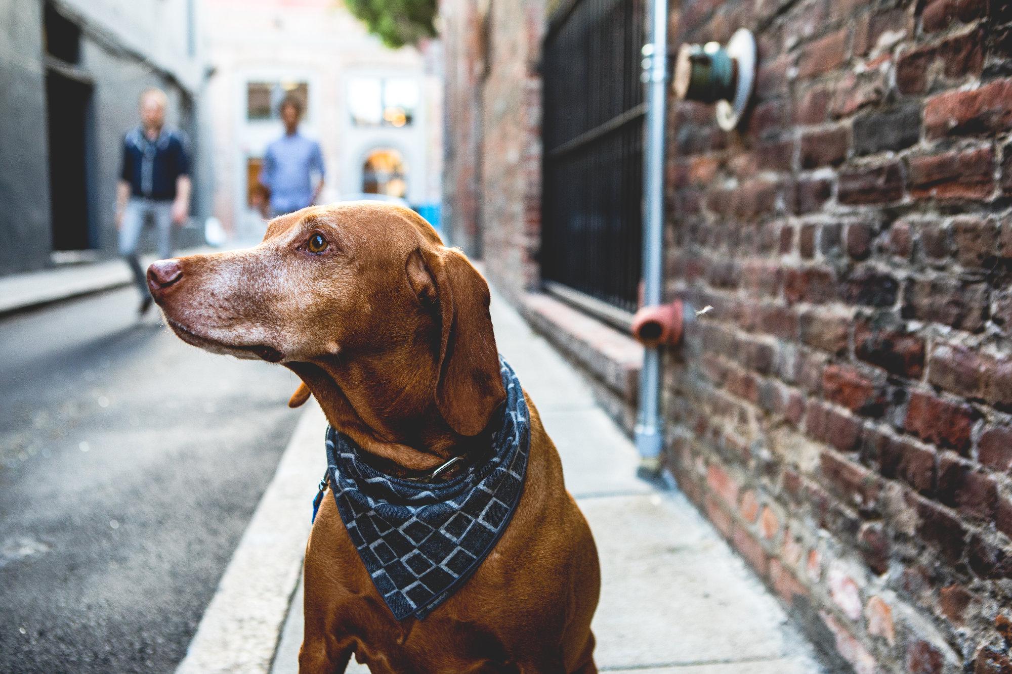 Pet friendly neighborhood