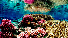 Coral Degradation: Impacts on Reef Biodiversity & Reef-Dependent Human Communities