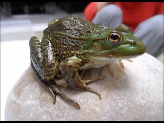 Monitoreo y Reproducción de Especies Nativas
