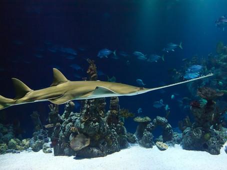 Especies marinas y el cambio climático