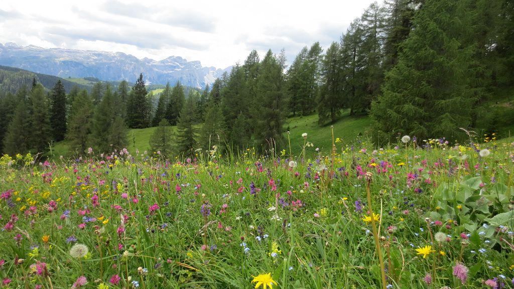 Vacanza estiva San Vigilio Dolomiti