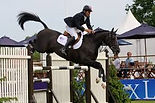 showjumping horses.jpg