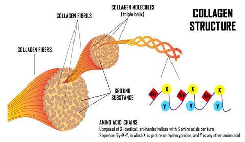 collagen fibre triple helix structure co