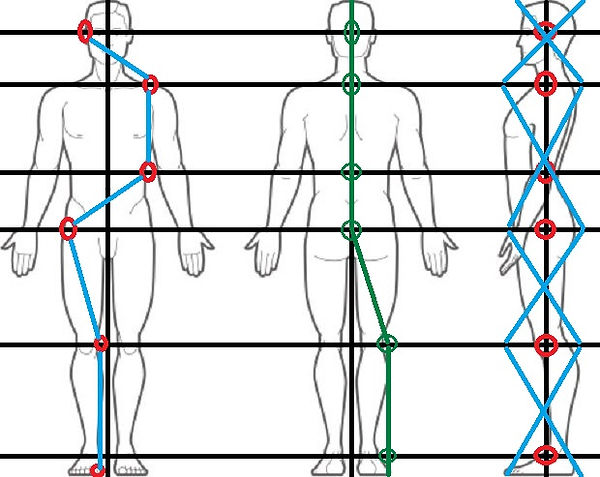 Copy of human body front back side.jpg