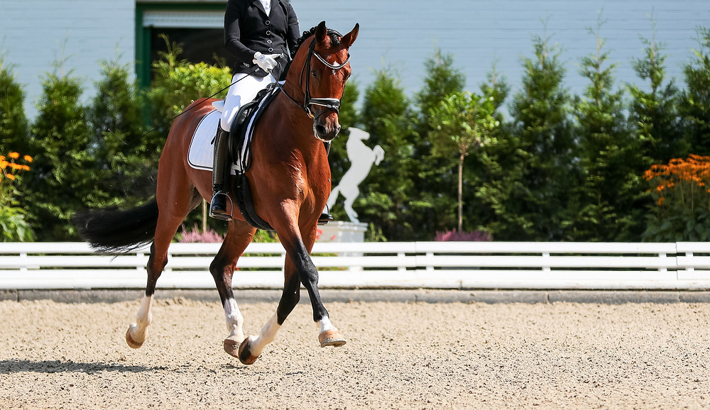 Dressage: horse and rider performing extended trot