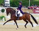 inter II dressage.jpg