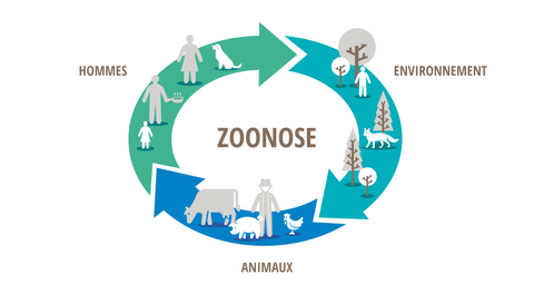 Zoonose