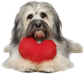 cachorro-saude-animal.png