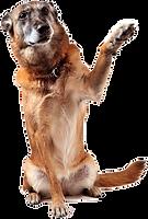 banho geriatrico veterinario