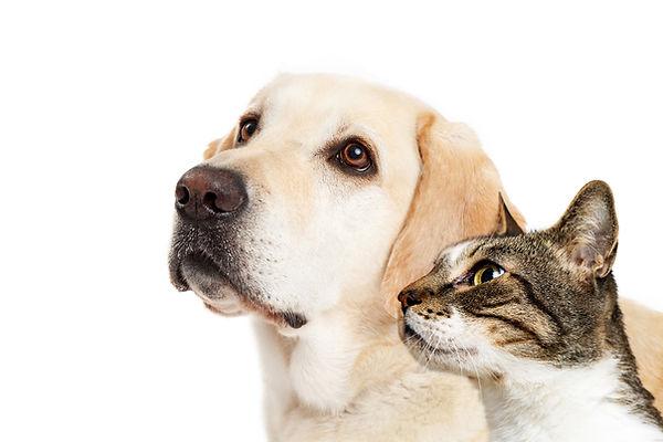 Quem Somos - Vida de Cão