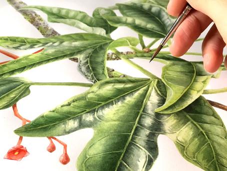 A Collaborative Commission- Big Botanical Banners!