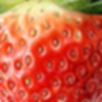 Amber's%20Strawberry%20for%20web_edited.