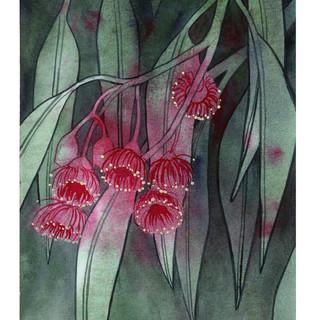 Flowering Gum