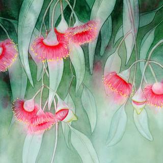 Flowering Gum Vevoke