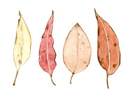Postcard Demo leaf study.jpg