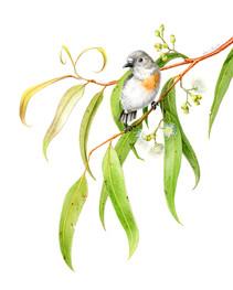 Pip's Scarlet Robin