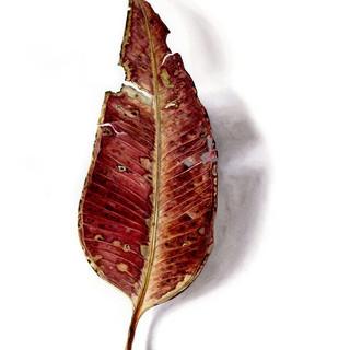 Fallen Leaf 3