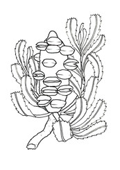 A4 Colour Me Prints-Banksia.jpg