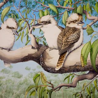 Canberra Kookaburras