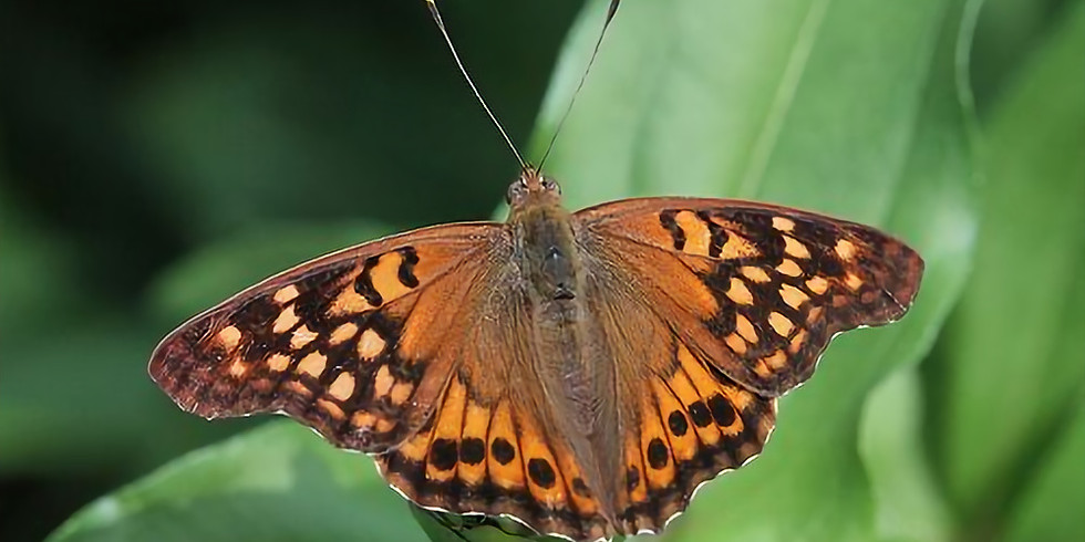 Butterfly Project Native Plant Share