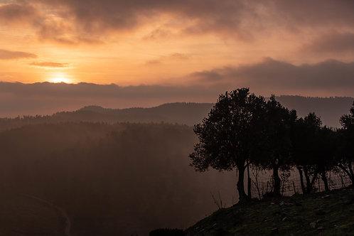 תמונת נוף - עצים בזריחה 767