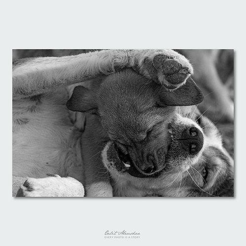 צילום כלבה עם גור בשחור לבן